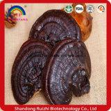 Seta secada el 100% Ganoderma salvaje Lucidum de Ganoderma Lucidum Reishi