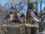 Оптовый вися фидер птицы способа ясный акриловый