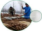 6%~98% Diosgenineの高品質の自然な野生ヤマイモのルートエキス