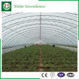 농업 알루미늄 단면도 플라스틱 온실