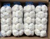 中国からの競争価格の純粋で白いニンニク