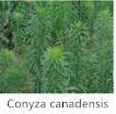 De nieuwe Hoge het glufosinaat-Ammonium 98%Tc&200g/L van het Herbicide van het Effect Niet-selectieve Brede Synergistic Agent van het Herbicide van het Spectrum