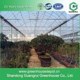 Film-Solargewächshaus für das Gemüsepflanzen