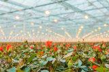 Lampada del rifornimento della fabbrica crescente di prezzi all'ingrosso di metallo della pianta diretta della lampada Halide 400W