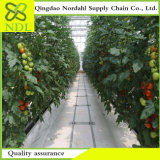 Culture hydroponique chaude cultivant le système de serre chaude pour la vente directe par Factory