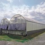 2017 최신 인기 상품 주문 산업 경제적인 필름 정원 온실