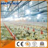 Оборудование птицефермы цыпленка с Prefab домом в низкой цене