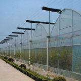 Invernadero de la película plástica de Multispan para la horticultura vegetal de la flor