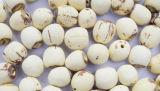 Semences biologiques de lotus en vrac, semences de lotus sans noyau