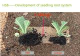 Trace Elementsの有機性Microbial Seaweed Fertilizer