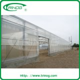 Multi Span Film Greenhouse для Hydroponics Vegetable