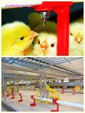 Maquinaria modificada para requisitos particulares de la avicultura con alta calidad