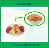 Extracto de la tuerca de cola/cola Acuminata/tebromina