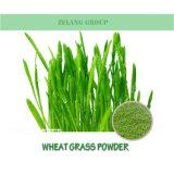 De fabriek levert Poeder van het Uittreksel van het Gras van de Tarwe van 100% het Organische In water oplosbare