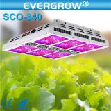 O diodo emissor de luz 400W usado Hydroponics cresce a luz