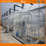 Po Film Greenhouse con Seeding Bed