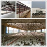 Het Landbouwbedrijf van het Gevogelte van de Structuur van het staal met de Apparatuur die van de Huisvesting wordt afgeworpen