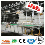 Cage de poulet de matériel de ferme avicole