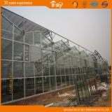 Extensivamente Used Glass Greenhouse para Agricultural Planting