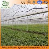 Serre calde della portata della vasta gamma di vendita multi per produzione agricola