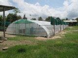 Túnel vegetal da estufa da única extensão