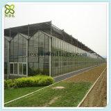 현대 상업적인 정원 유리 집