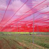 Экономичные парники земледелия с сетью навеса и сетью насекомого *