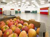 200ton-10000ton Appleの冷蔵室Storage/Caの冷蔵室