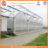 ローズまたはポテトのための庭か農場またはトンネルのマルチスパンのプラスチックフィルムの温室