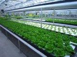 Patentierte LED wachsen helle Baugruppe für Zierpflanzen