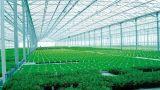 Afbaarden van Pretection van de Regen van de Verlichting van de Lichte Transmissie van 80% het Natuurlijke