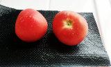 Frucht-Verpackungs-Auflage