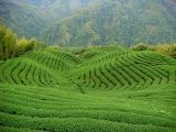 Handgemachter grüner Tee Nr. 2