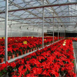 Большой тип парник цветков низкой стоимости аграрный