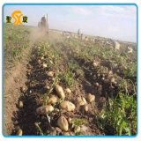 세륨, SGS를 가진 좋은 성과 머피 /Potato 수확기