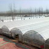 다중 경간 농업 플레스틱 필름 녹색 집