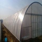 Invernadero caliente del compuesto de la alta calidad