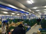 500ton -10000tonのロジスティクスの冷蔵室のスリラーのフリーザーのプロジェクト