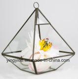 ハングのための卸し売りガラス幾何学的な陸生動物飼育器