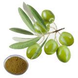 Extracto de hoja de olivo / oleuropeína HPLC para los Alimentos y Suplemento