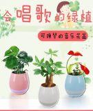 Smart Touch Plant Piano Night Light Haut-parleur Bluetooth Sans fil Flower Flower Flower avec lampe LED