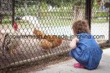 [سيلين] [وير مش] [شين لينك] سياج لأنّ مزرعة