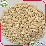 Семя тыквы 12mm кожи Shine AAA ранга сырцовое