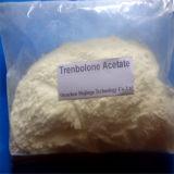 Di colore giallo della polvere steroide grezza dell'acetato di Trenbolone polvere scura dello steroide di Trenboloe e chiaro