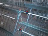 Клетки батареи для кладя куриц