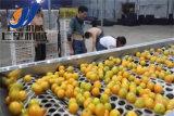 Linha de produção do suco de limão do ANG/maquinaria alaranjadas equipamento do arquivamento