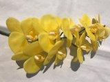 Венчание букета цветка орхидеи бабочки нового домашнего украшения искусствоа комнаты способа DIY декора живущий искусственное Silk