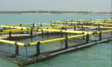 Jaula agrícola flotante de agua dulce de los pescados
