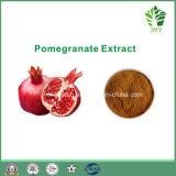 Haut-Sorgfalt-Granatapfel-Auszug-Ellagic Säure 40%-95% HPLC