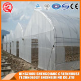 Landwirtschafts-wachsendes Zelt-Plastikfilm-grünes Innenhaus mit Wasserkultursystem